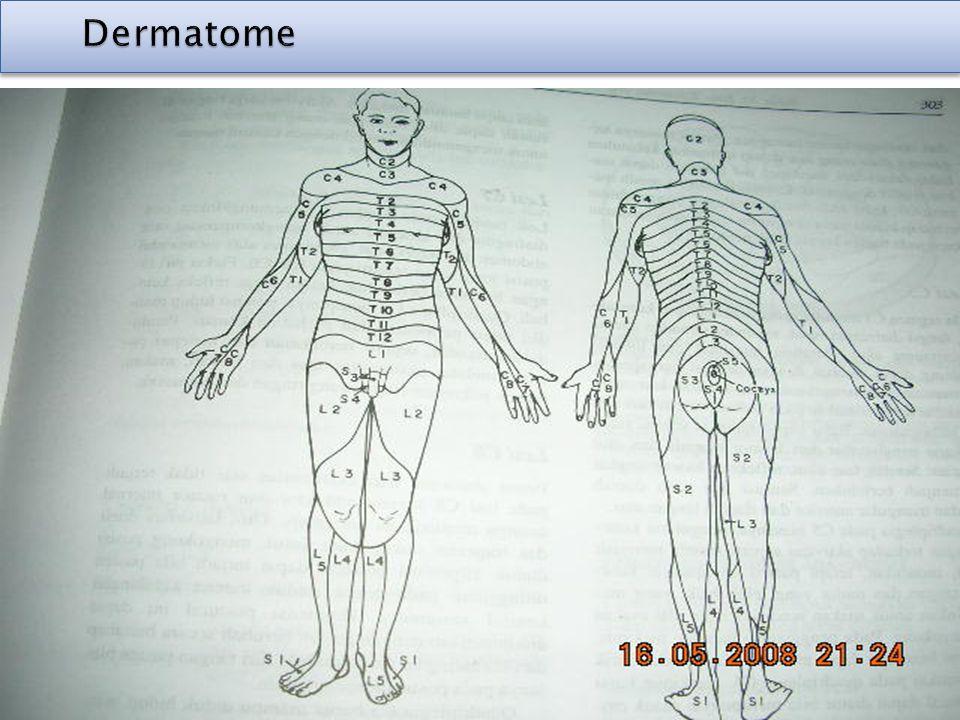 Dermatome Dermatome