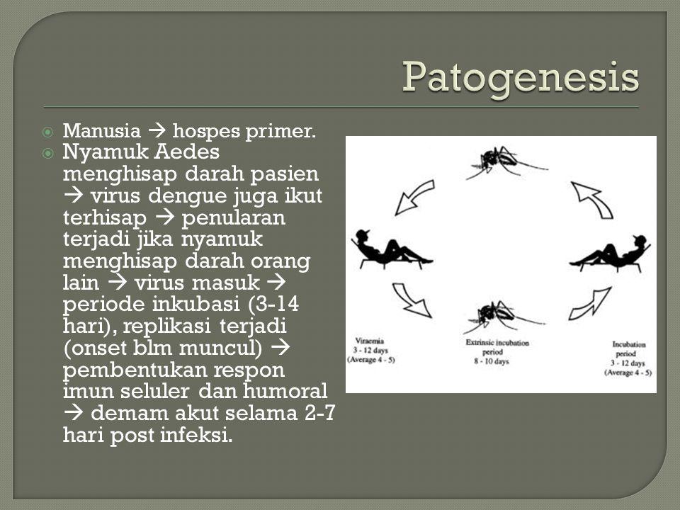  Manusia  hospes primer.  Nyamuk Aedes menghisap darah pasien  virus dengue juga ikut terhisap  penularan terjadi jika nyamuk menghisap darah ora