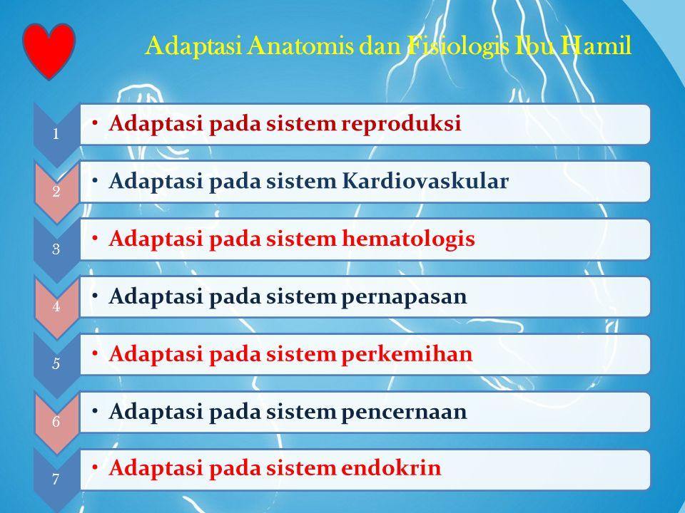 Adaptasi Anatomis dan Fisiologis Ibu Hamil 1 Adaptasi pada sistem reproduksi 2 Adaptasi pada sistem Kardiovaskular 3 Adaptasi pada sistem hematologis