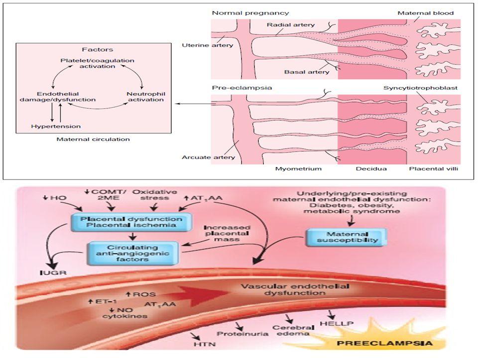 Masalah Traktus Respiratorius : * 1-4% kehamilan dikomplikasi oleh asma * >> Kortisol dan histamin  perbaikan asma * Dikaitkan dengan kelahiran preterm, berat badan lahir rendah, mortalitas neonates, hiperemesis gravidarum, perdarahan vaginal dan pre eklampsia Masalah Traktus Urinarius : * berupa bakteriuria asimptomatis (1- 1,5%); sistitis (0.3-1.3%); dan pielonefritis (1-2%).