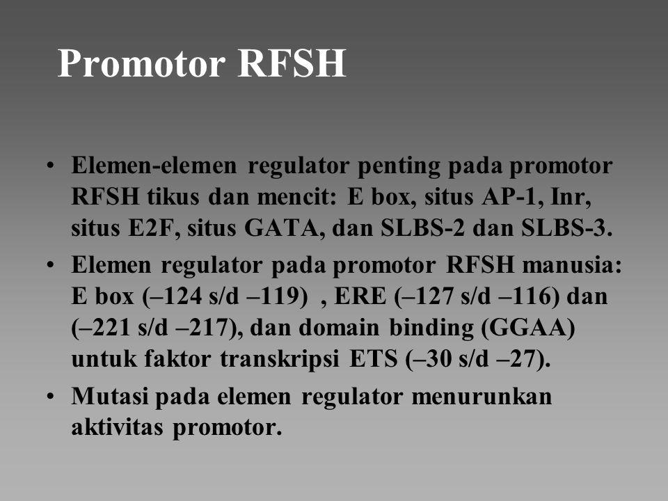 Promotor RFSH Elemen-elemen regulator penting pada promotor RFSH tikus dan mencit: E box, situs AP-1, Inr, situs E2F, situs GATA, dan SLBS-2 dan SLBS-