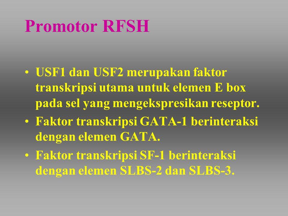 Promotor RFSH USF1 dan USF2 merupakan faktor transkripsi utama untuk elemen E box pada sel yang mengekspresikan reseptor. Faktor transkripsi GATA-1 be