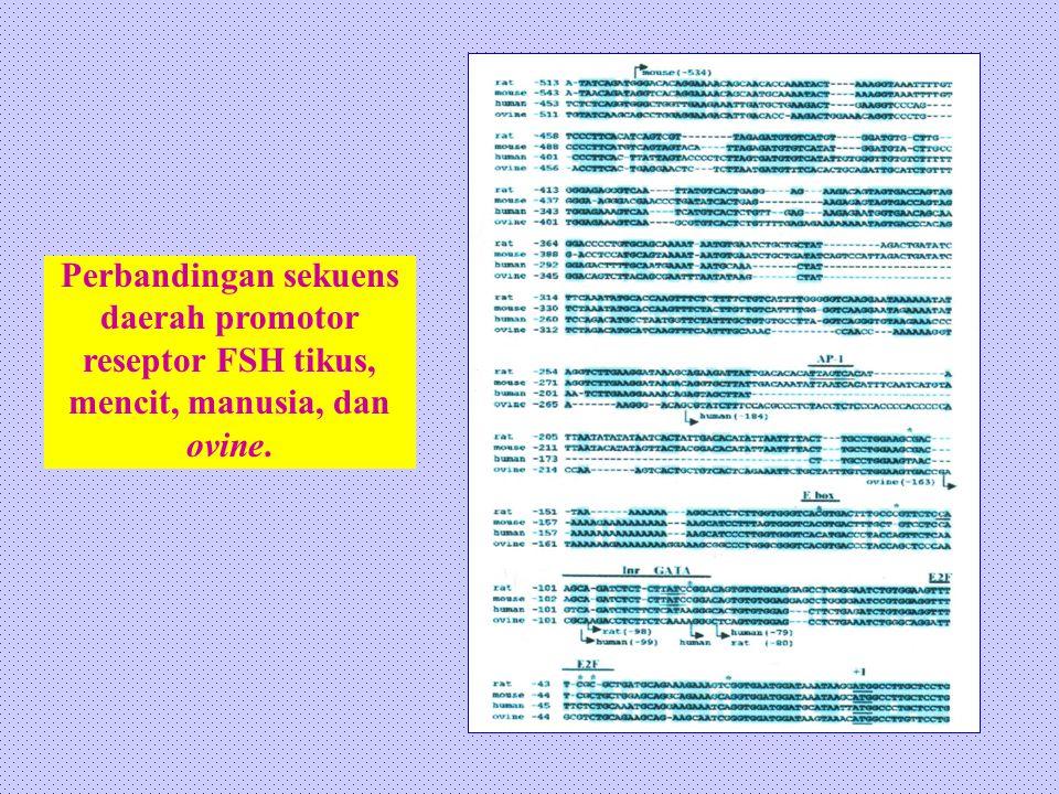 Perbandingan sekuens daerah promotor reseptor FSH tikus, mencit, manusia, dan ovine.