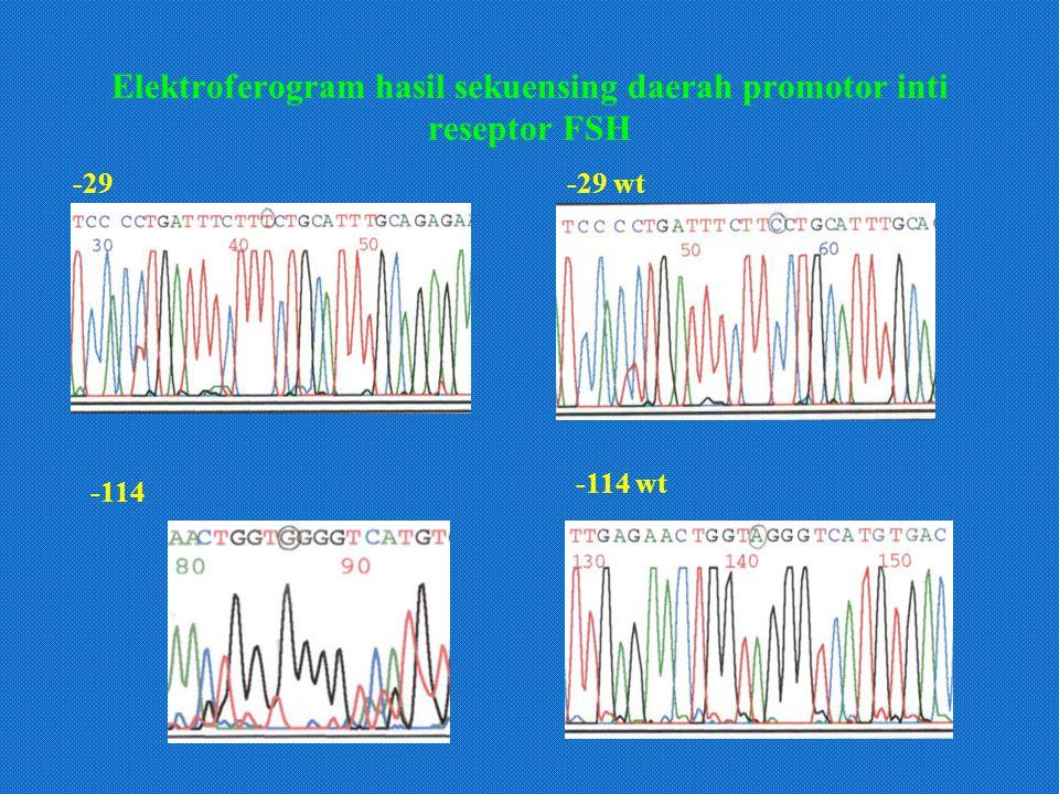 Elektroferogram hasil sekuensing daerah promotor inti reseptor FSH -29-29 wt -114 -114 wt