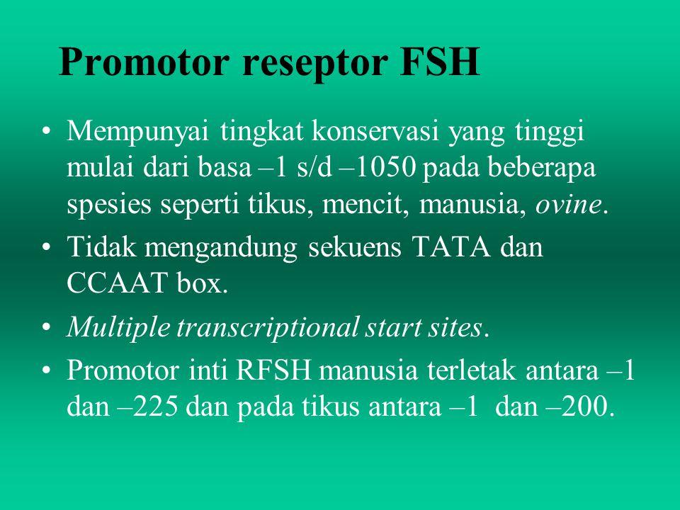 Promotor reseptor FSH Mempunyai tingkat konservasi yang tinggi mulai dari basa –1 s/d –1050 pada beberapa spesies seperti tikus, mencit, manusia, ovin