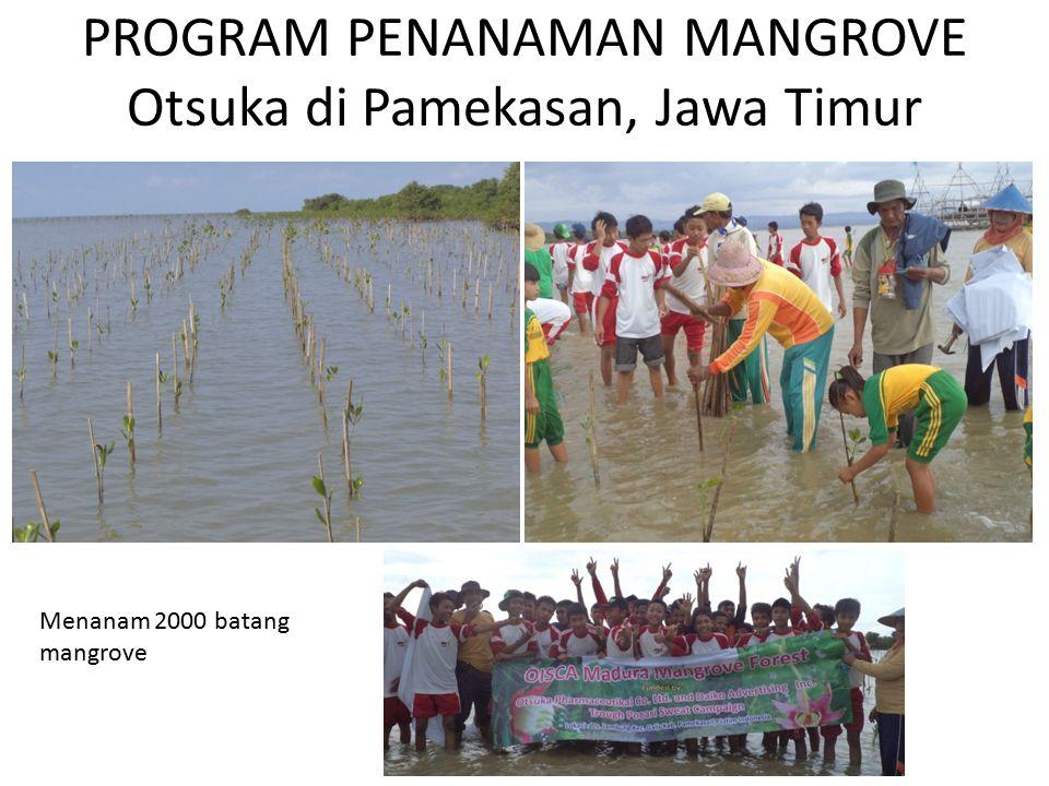 PROGRAM PENANAMAN MANGROVE Otsuka di Pamekasan, Jawa Timur Menanam 2000 batang mangrove