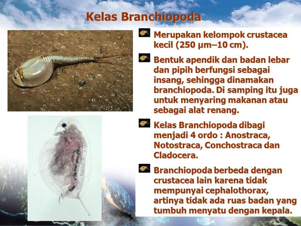 Kelas Branchiopoda Merupakan kelompok crustacea kecil (250 µm–10 cm). Bentuk apendik dan badan lebar dan pipih berfungsi sebagai insang, sehingga dina