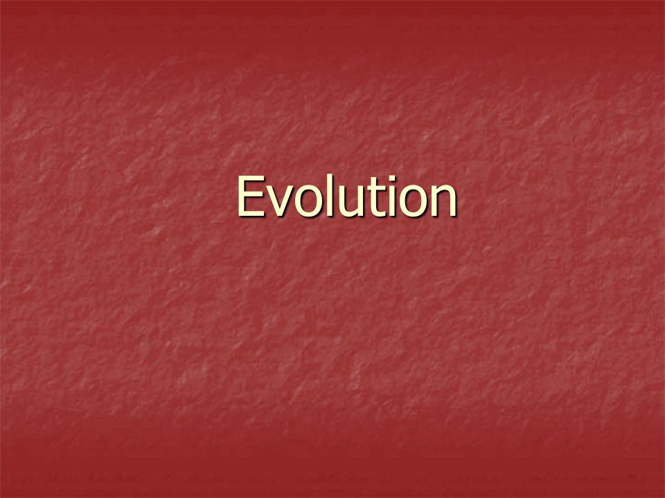Evolution Evolution