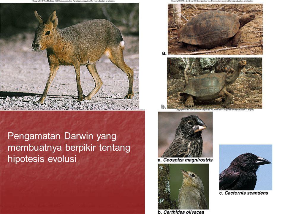 Pengamatan Darwin yang membuatnya berpikir tentang hipotesis evolusi