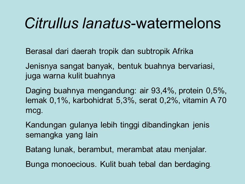Citrullus lanatus-watermelons Berasal dari daerah tropik dan subtropik Afrika Jenisnya sangat banyak, bentuk buahnya bervariasi, juga warna kulit buah