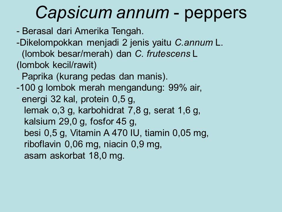 Capsicum annum - peppers - Berasal dari Amerika Tengah. -Dikelompokkan menjadi 2 jenis yaitu C.annum L. (lombok besar/merah) dan C. frutescens L (lomb