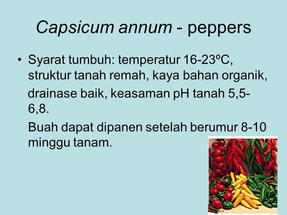 Capsicum annum - peppers Syarat tumbuh: temperatur 16-23ºC, struktur tanah remah, kaya bahan organik, drainase baik, keasaman pH tanah 5,5- 6,8. Buah