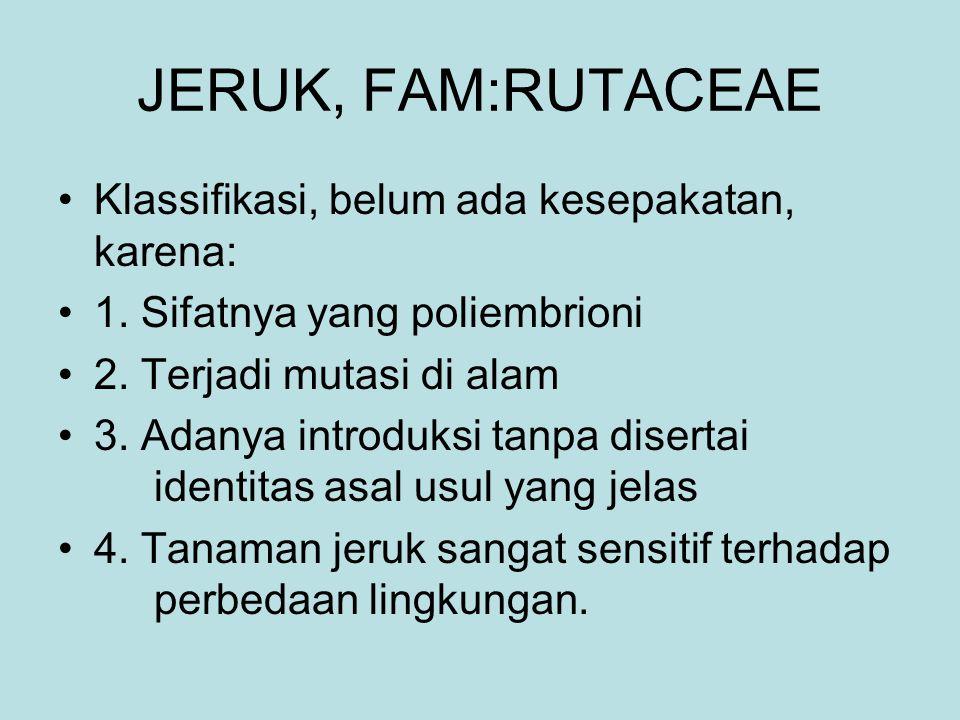 JERUK, FAM:RUTACEAE Klassifikasi, belum ada kesepakatan, karena: 1. Sifatnya yang poliembrioni 2. Terjadi mutasi di alam 3. Adanya introduksi tanpa di