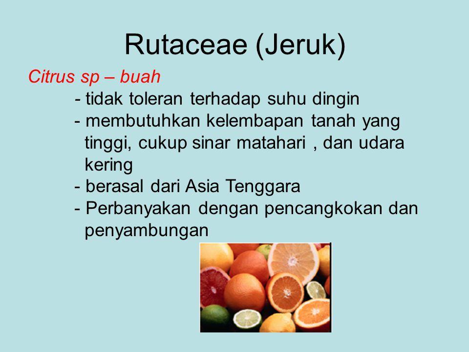 Rutaceae (Jeruk) Citrus sp – buah - tidak toleran terhadap suhu dingin - membutuhkan kelembapan tanah yang tinggi, cukup sinar matahari, dan udara ker