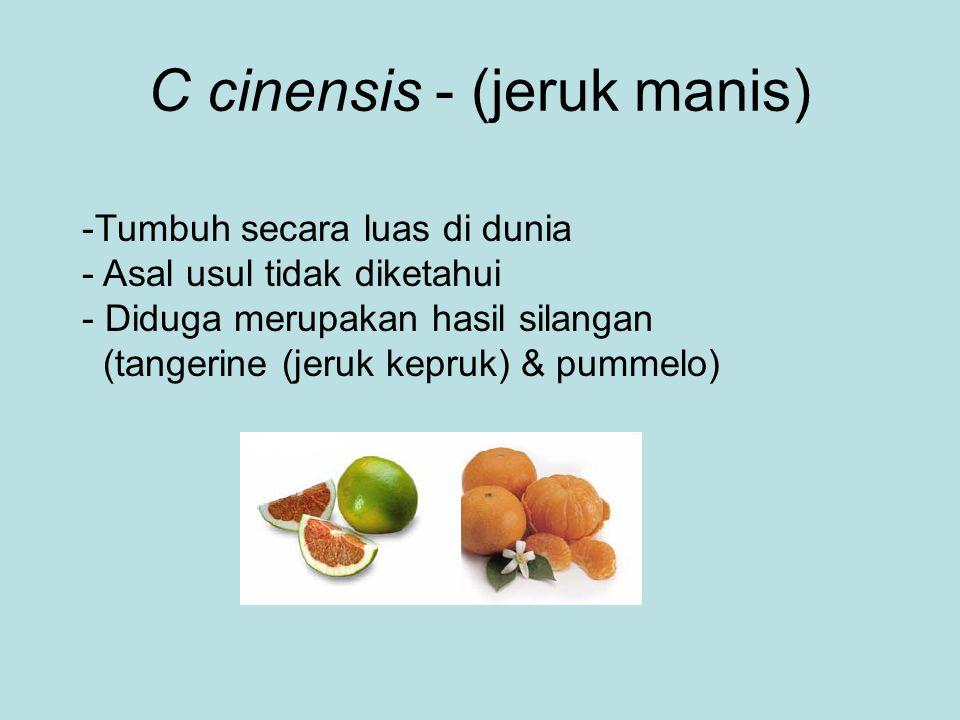 C cinensis - (jeruk manis) -Tumbuh secara luas di dunia - Asal usul tidak diketahui - Diduga merupakan hasil silangan (tangerine (jeruk kepruk) & pumm