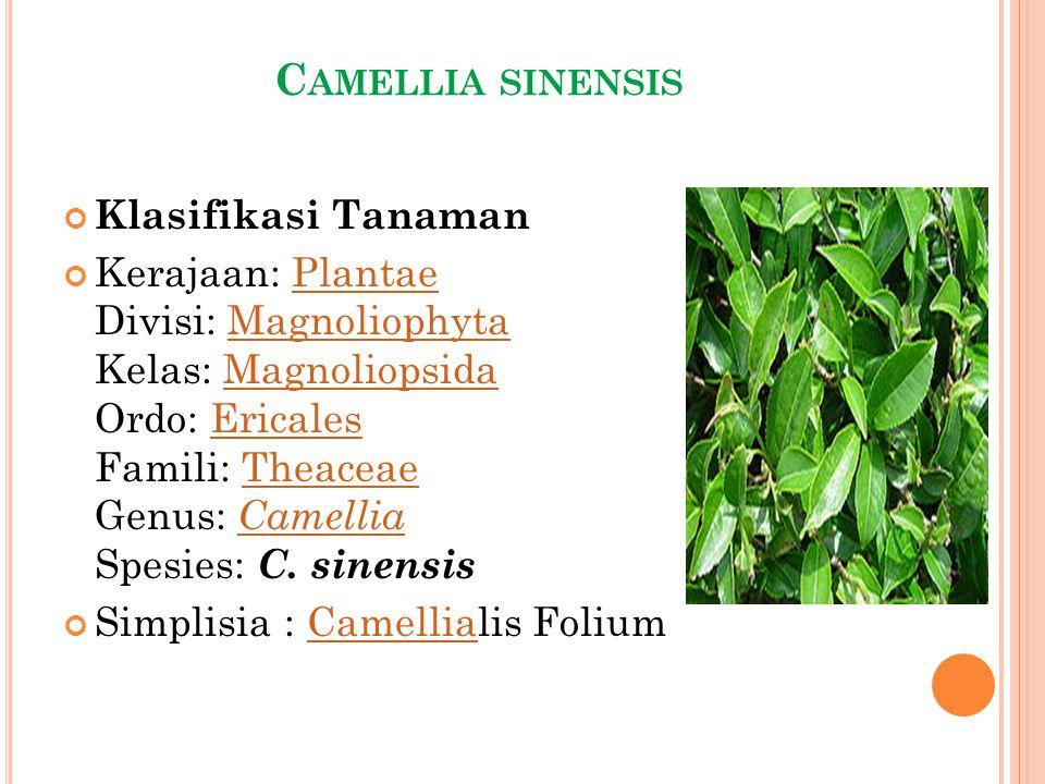 C AMELLIA SINENSIS Klasifikasi Tanaman Kerajaan: Plantae Divisi: Magnoliophyta Kelas: Magnoliopsida Ordo: Ericales Famili: Theaceae Genus: Camellia Sp
