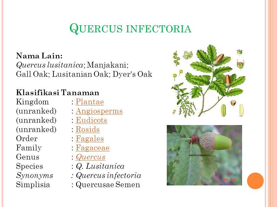 Q UERCUS INFECTORIA Nama Lain: Quercus lusitanica ; Manjakani; Gall Oak; Lusitanian Oak; Dyer's Oak Klasifikasi Tanaman Kingdom: PlantaePlantae (unran