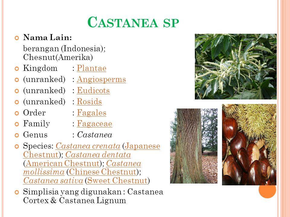 C ASTANEA SP Nama Lain: berangan (Indonesia); Chesnut(Amerika) Kingdom: PlantaePlantae (unranked): AngiospermsAngiosperms (unranked): EudicotsEudicots