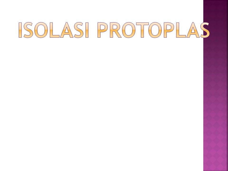  Salah satu cara untuk mengembangkan tanaman unggul adalah dengan merakit varietas baru yg berproduksi tinggi dan tahan terhadap hama penyakit adl dengan isolasi protoplas  Protoplas  sel tumb yg telah dihilangkan dinding selnya atau sel telanjang