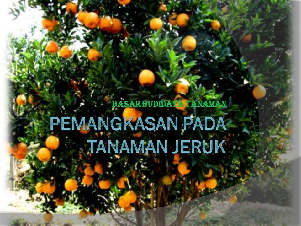 Oleh  Devina Cinantya Anindita(115040201111053)  Vindra Dian Permata(115040201111054)  Rose Novita Sari Handoko (115040201111055)  Rony Andrea Hermawan(115040201111056 )