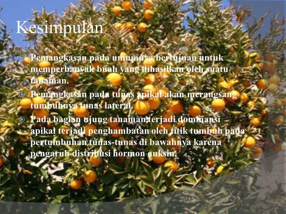 Kesimpulan  Pemangkasan pada umumnya bertujuan untuk memperbanyak buah yang dihasilkan oleh suatu tanaman.