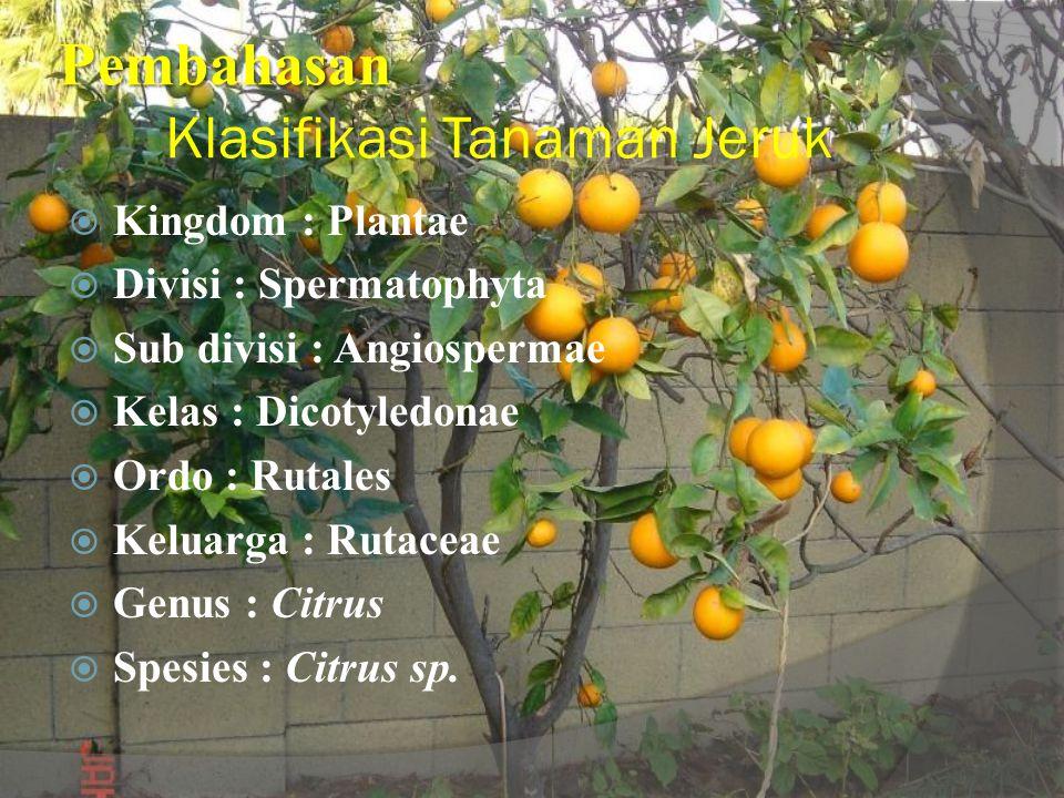 Pembahasan Pembahasan Klasifikasi Tanaman Jeruk  Kingdom : Plantae  Divisi : Spermatophyta  Sub divisi : Angiospermae  Kelas : Dicotyledonae  Ordo : Rutales  Keluarga : Rutaceae  Genus : Citrus  Spesies : Citrus sp.