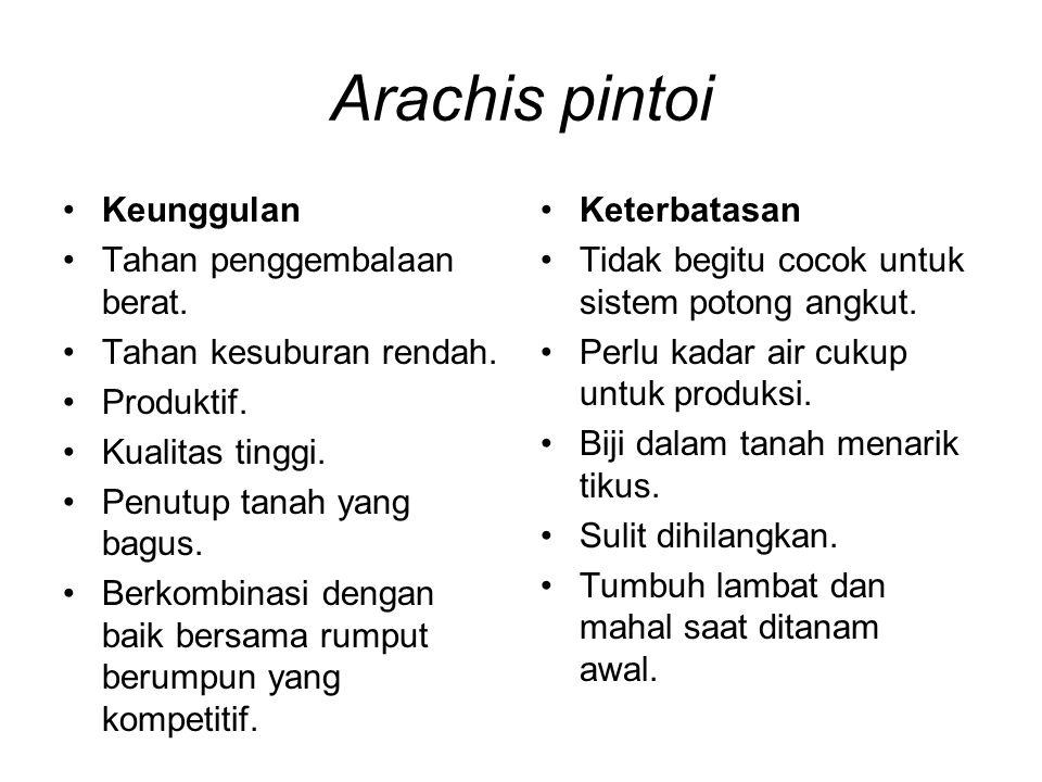 Arachis pintoi Keunggulan Tahan penggembalaan berat. Tahan kesuburan rendah. Produktif. Kualitas tinggi. Penutup tanah yang bagus. Berkombinasi dengan