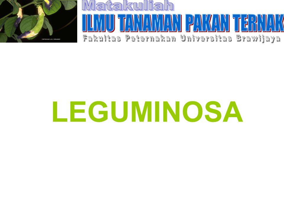 LEGUMINOSA