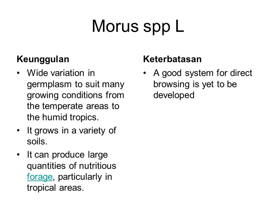Morus spp L Keunggulan Wide variation in germplasm to suit many growing conditions from the temperate areas to the humid tropics. It grows in a variet