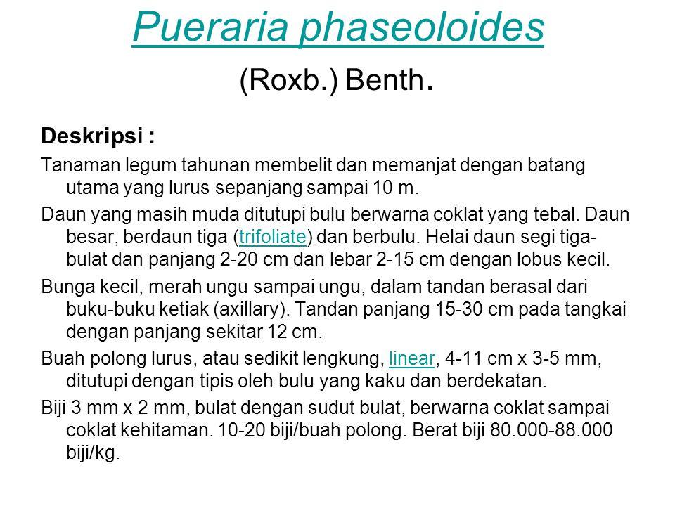 Pueraria phaseoloides Pueraria phaseoloides (Roxb.) Benth. Deskripsi : Tanaman legum tahunan membelit dan memanjat dengan batang utama yang lurus sepa