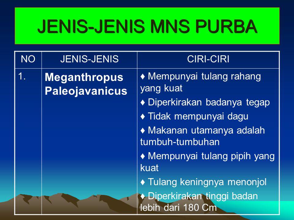 JENIS-JENIS MNS PURBA NOJENIS-JENISCIRI-CIRI 1. Meganthropus Paleojavanicus ♦ Mempunyai tulang rahang yang kuat ♦ Diperkirakan badanya tegap ♦ Tidak m
