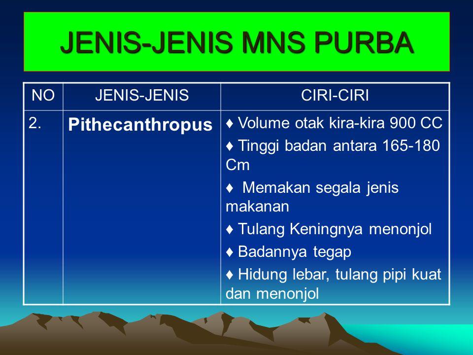 JENIS-JENIS MNS PURBA NOJENIS-JENISCIRI-CIRI 2. Pithecanthropus ♦ Volume otak kira-kira 900 CC ♦ Tinggi badan antara 165-180 Cm ♦ Memakan segala jenis