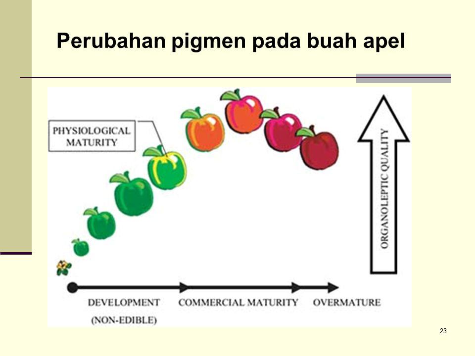 23 Perubahan pigmen pada buah apel