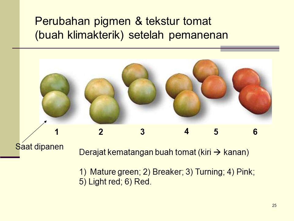 25 Perubahan pigmen & tekstur tomat (buah klimakterik) setelah pemanenan Saat dipanen Derajat kematangan buah tomat (kiri  kanan) 1)Mature green; 2)
