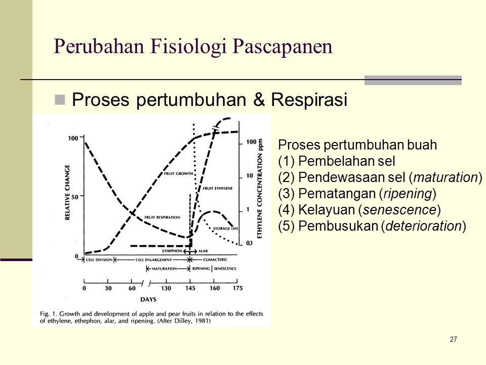 27 Perubahan Fisiologi Pascapanen Proses pertumbuhan & Respirasi Proses pertumbuhan buah (1) Pembelahan sel (2) Pendewasaan sel (maturation) (3) Pemat