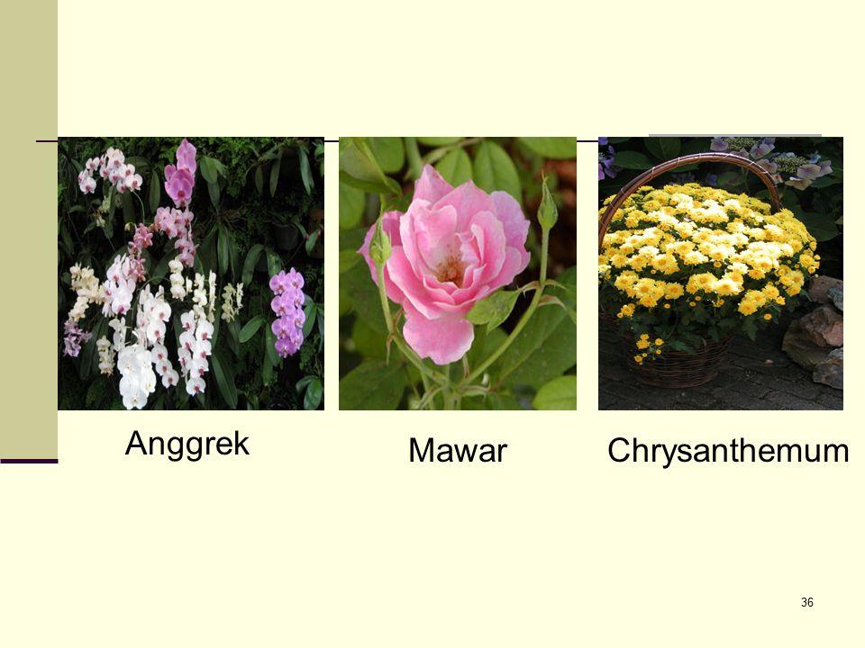 36 Anggrek MawarChrysanthemum