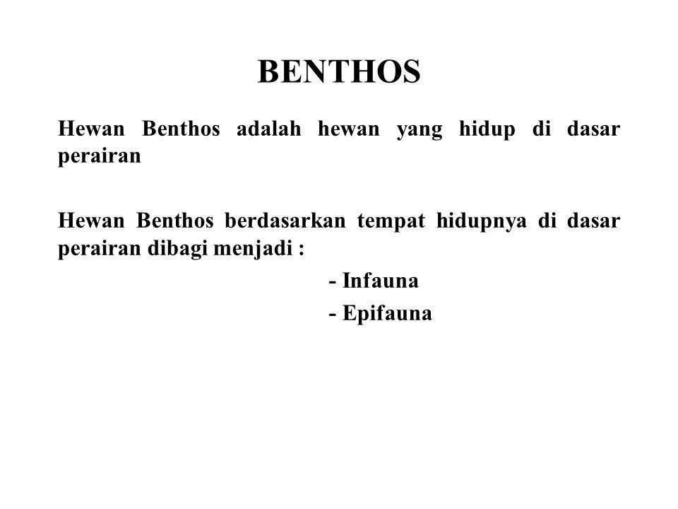 BENTHOS Hewan Benthos adalah hewan yang hidup di dasar perairan Hewan Benthos berdasarkan tempat hidupnya di dasar perairan dibagi menjadi : - Infauna