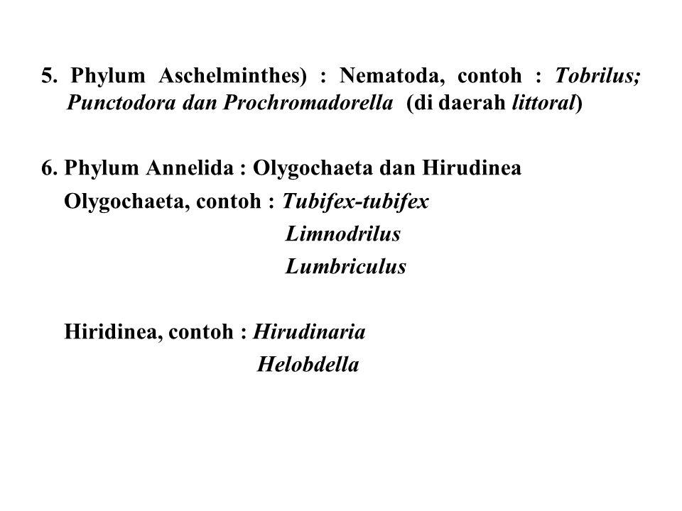5. Phylum Aschelminthes) : Nematoda, contoh : Tobrilus; Punctodora dan Prochromadorella (di daerah littoral) 6. Phylum Annelida : Olygochaeta dan Hiru