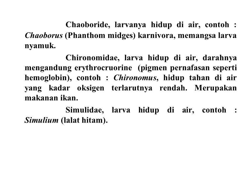 Chaoboride, larvanya hidup di air, contoh : Chaoborus (Phanthom midges) karnivora, memangsa larva nyamuk. Chironomidae, larva hidup di air, darahnya m