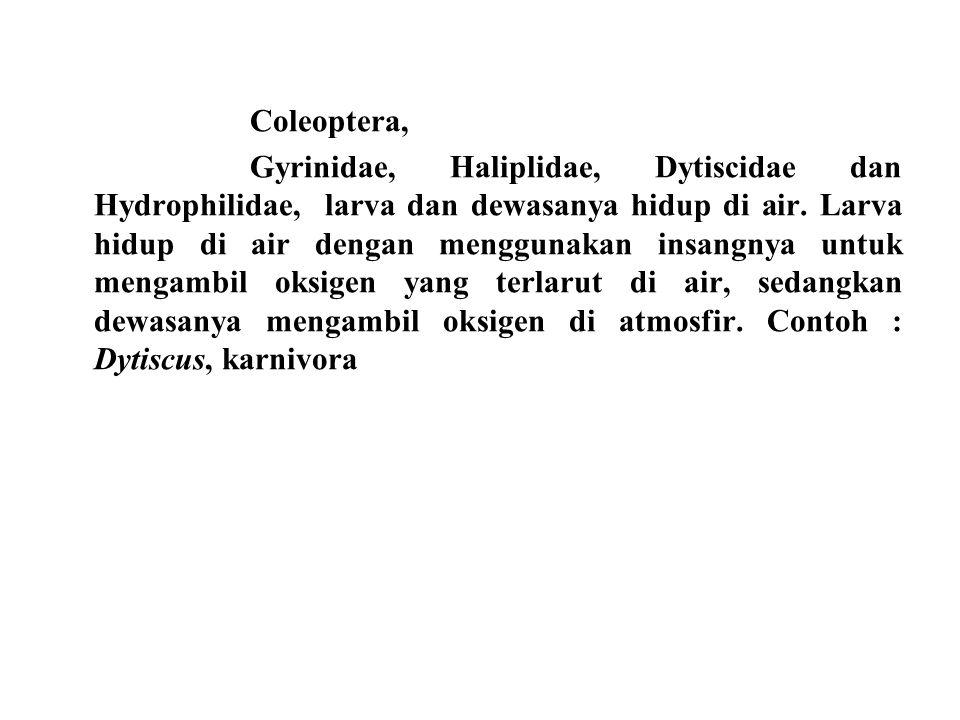 Coleoptera, Gyrinidae, Haliplidae, Dytiscidae dan Hydrophilidae, larva dan dewasanya hidup di air. Larva hidup di air dengan menggunakan insangnya unt