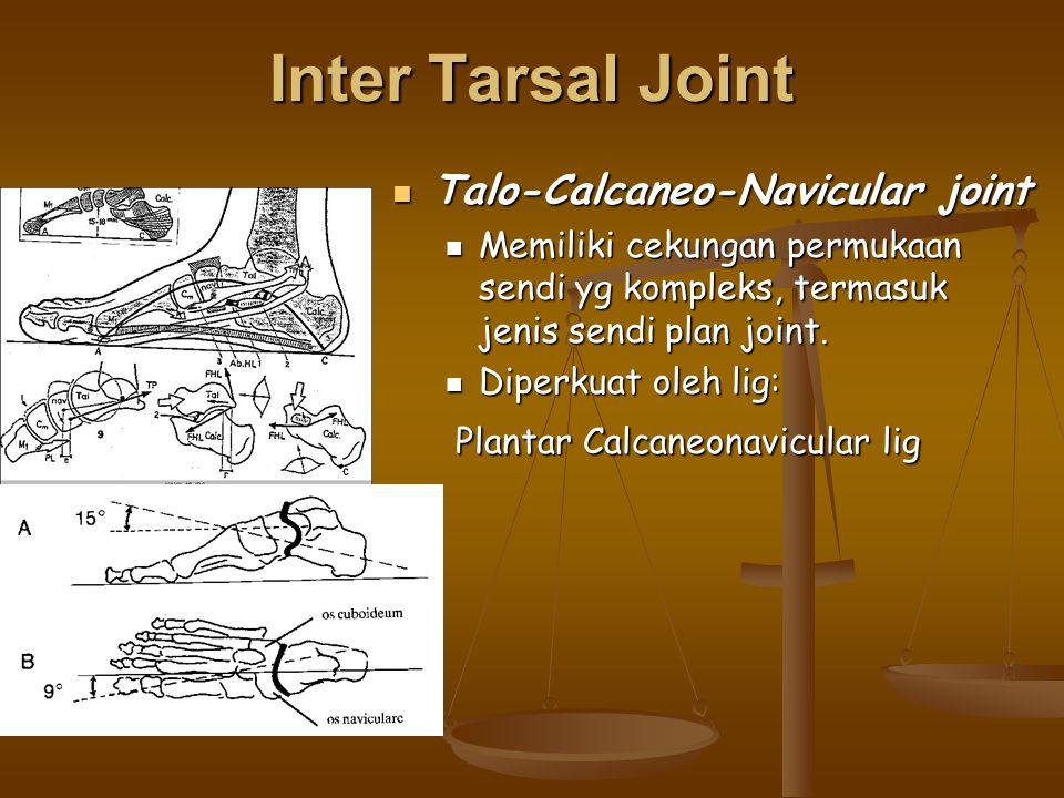 Inter Tarsal Joint Talo-Calcaneo-Navicular joint Talo-Calcaneo-Navicular joint Memiliki cekungan permukaan sendi yg kompleks, termasuk jenis sendi pla