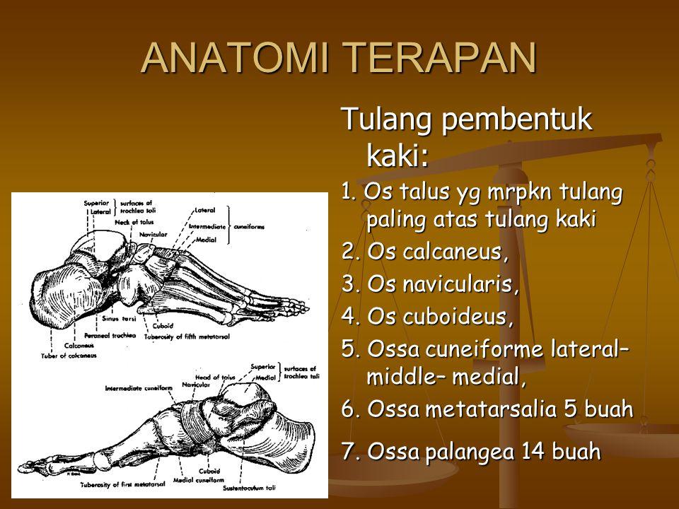 ANATOMI TERAPAN Tulang pembentuk kaki: 1. Os talus yg mrpkn tulang paling atas tulang kaki 2. Os calcaneus, 3. Os navicularis, 4. Os cuboideus, 5. Oss