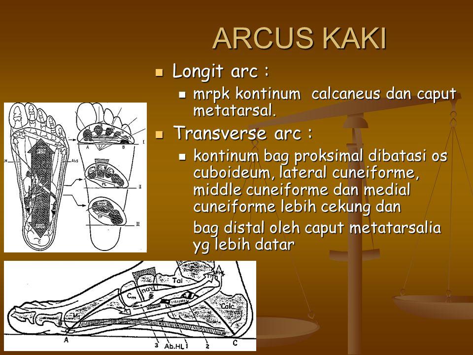 ARCUS KAKI Longit arc : Longit arc : mrpk kontinum calcaneus dan caput metatarsal. mrpk kontinum calcaneus dan caput metatarsal. Transverse arc : Tran