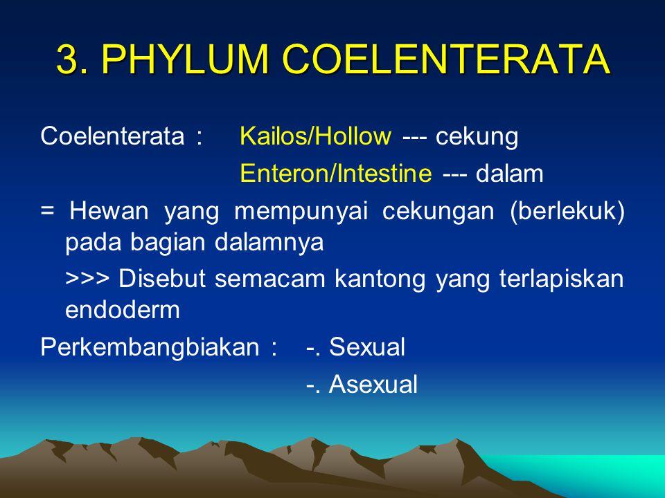 3. PHYLUM COELENTERATA Coelenterata : Kailos/Hollow --- cekung Enteron/Intestine --- dalam = Hewan yang mempunyai cekungan (berlekuk) pada bagian dala
