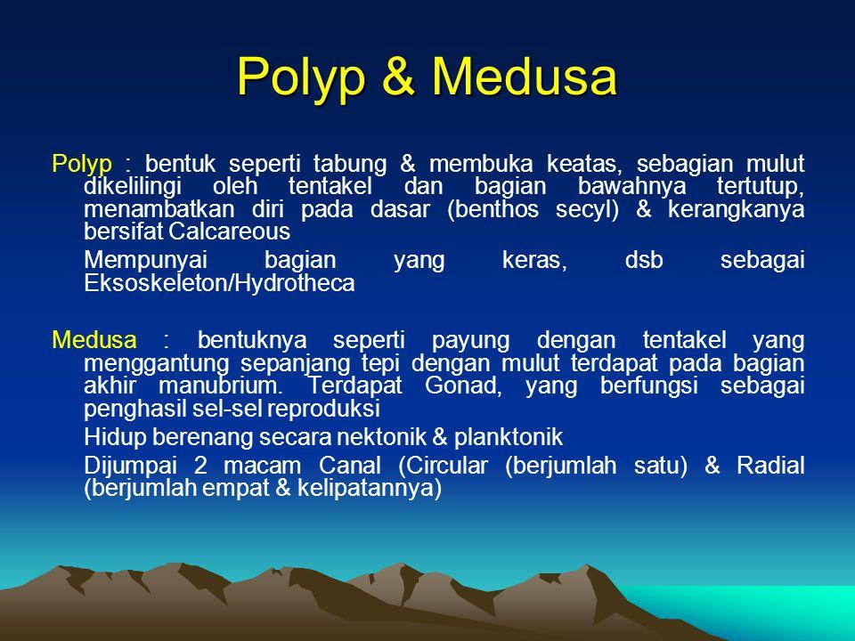 Polyp & Medusa Polyp : bentuk seperti tabung & membuka keatas, sebagian mulut dikelilingi oleh tentakel dan bagian bawahnya tertutup, menambatkan diri pada dasar (benthos secyl) & kerangkanya bersifat Calcareous Mempunyai bagian yang keras, dsb sebagai Eksoskeleton/Hydrotheca Medusa : bentuknya seperti payung dengan tentakel yang menggantung sepanjang tepi dengan mulut terdapat pada bagian akhir manubrium.