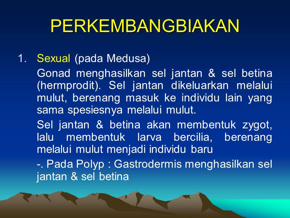 PERKEMBANGBIAKAN 1.Sexual (pada Medusa) Gonad menghasilkan sel jantan & sel betina (hermprodit). Sel jantan dikeluarkan melalui mulut, berenang masuk