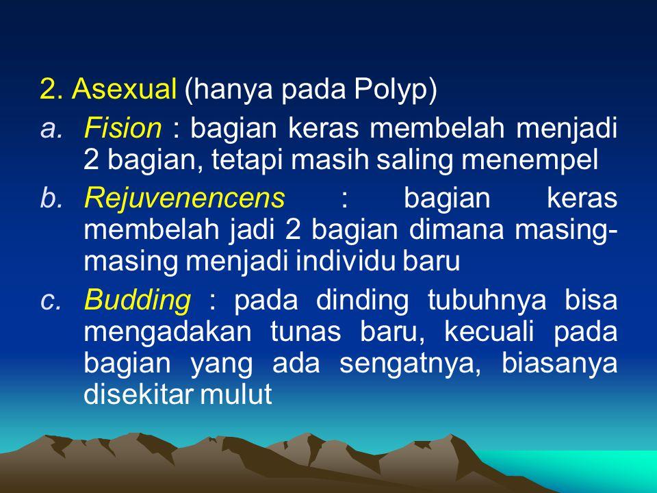 2. Asexual (hanya pada Polyp) a.Fision : bagian keras membelah menjadi 2 bagian, tetapi masih saling menempel b.Rejuvenencens : bagian keras membelah
