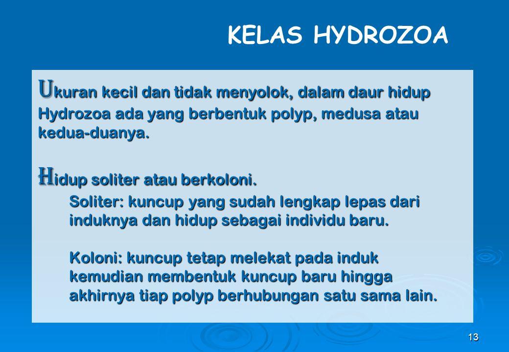 13 U kuran kecil dan tidak menyolok, dalam daur hidup Hydrozoa ada yang berbentuk polyp, medusa atau kedua-duanya. H idup soliter atau berkoloni. Soli