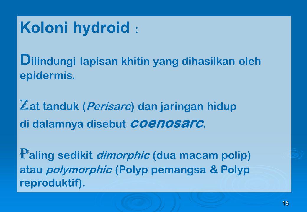 15 Koloni hydroid : D ilindungi lapisan khitin yang dihasilkan oleh epidermis. Z at tanduk (Perisarc) dan jaringan hidup di dalamnya disebut coenosarc