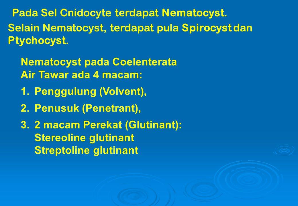 Pada Sel Cnidocyte terdapat Nematocyst. Selain Nematocyst, terdapat pula Spirocyst dan Ptychocyst. Nematocyst pada Coelenterata Air Tawar ada 4 macam: